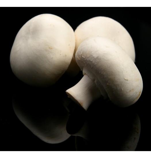Cogumelo Branco (Agaricus Bisporus)