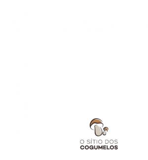 Bloco Produtor Agaricus Bisporus