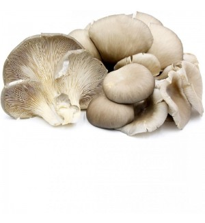 Cogumelo Pleurotus (kg)