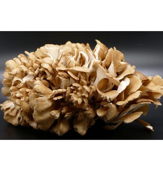 cogumelo Maitake 150g